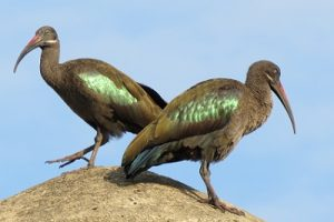 Bird life at Katara